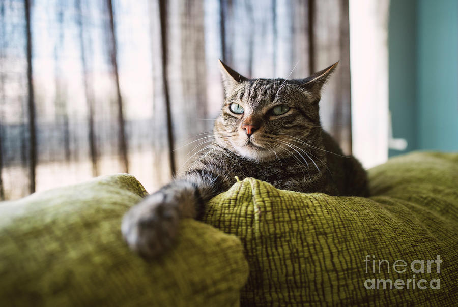 Tabby Cat Relaxing On Couch Photograph by Westend61
