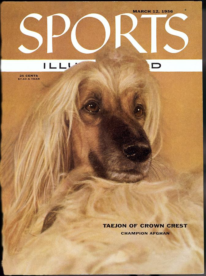 Taejon, 1955 Westminster Kennel Club Dog Show Sports Illustrated Cover Photograph by Sports Illustrated