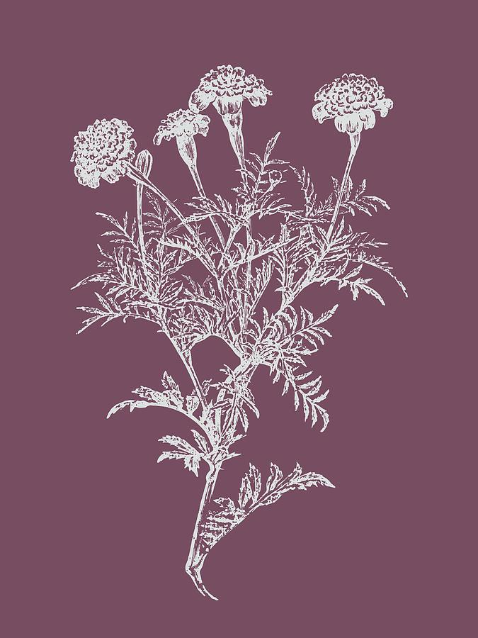 Flower Mixed Media - Tagetes Patula Purple Flower by Naxart Studio