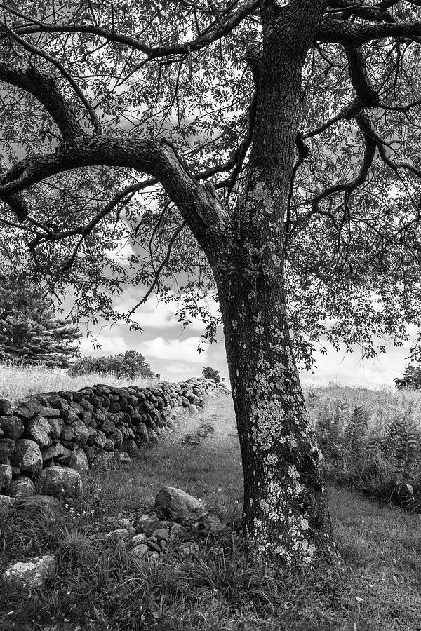 Take a Rest by Steven David Roberts