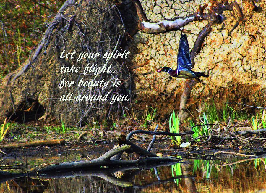 Take Flight by Kathy Kelly
