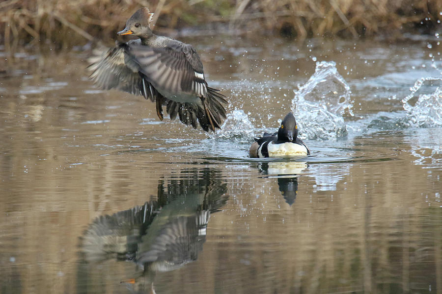 Take Off by Brook Burling