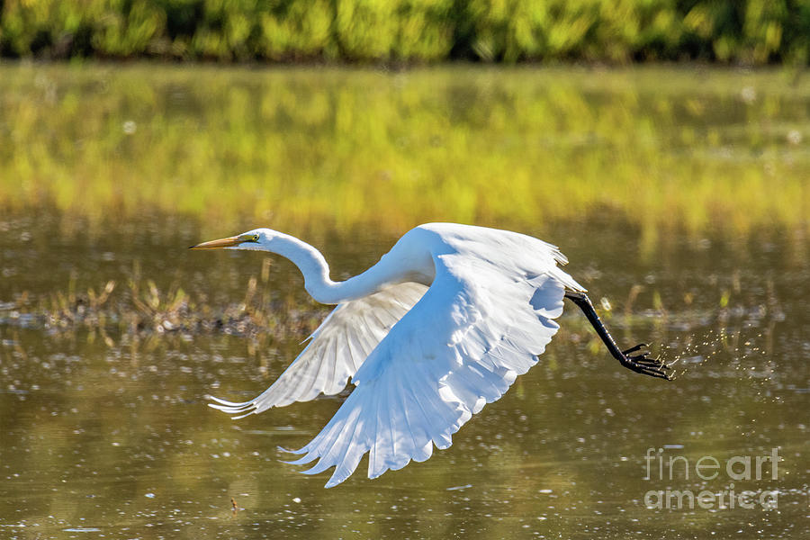 Take Off by Craig Leaper