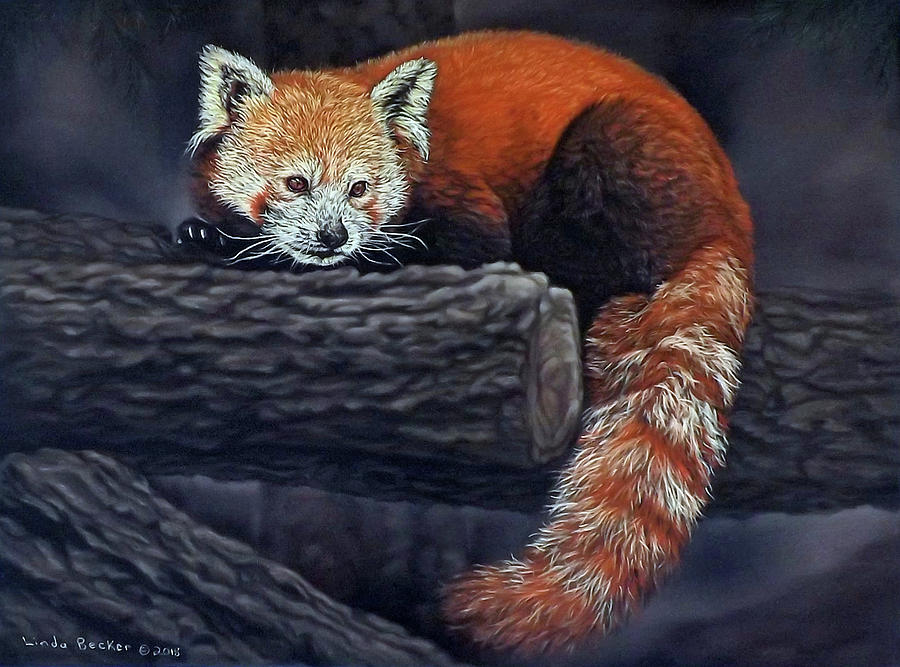 Takeo, the red panda by Linda Becker