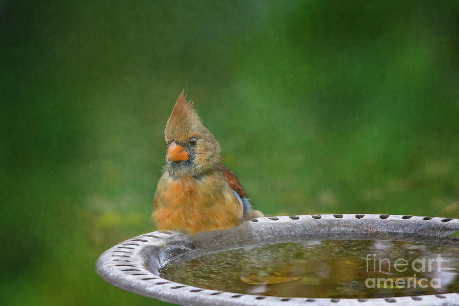 Taking a Bath by Jean Kirby
