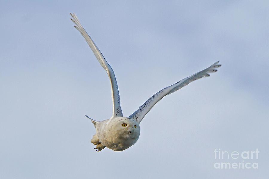 Taking Flight by Butch Lombardi