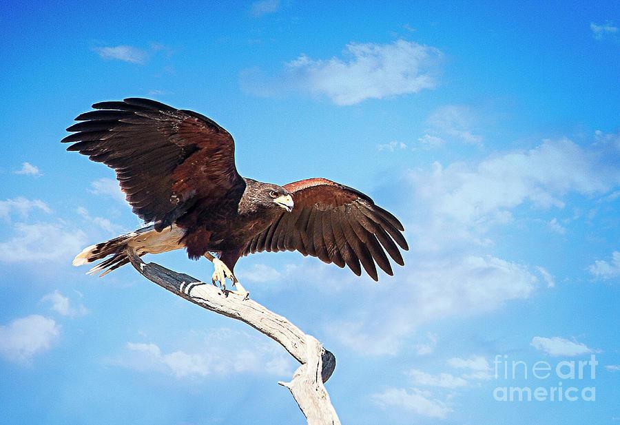 Taking Flight by Scott Kemper