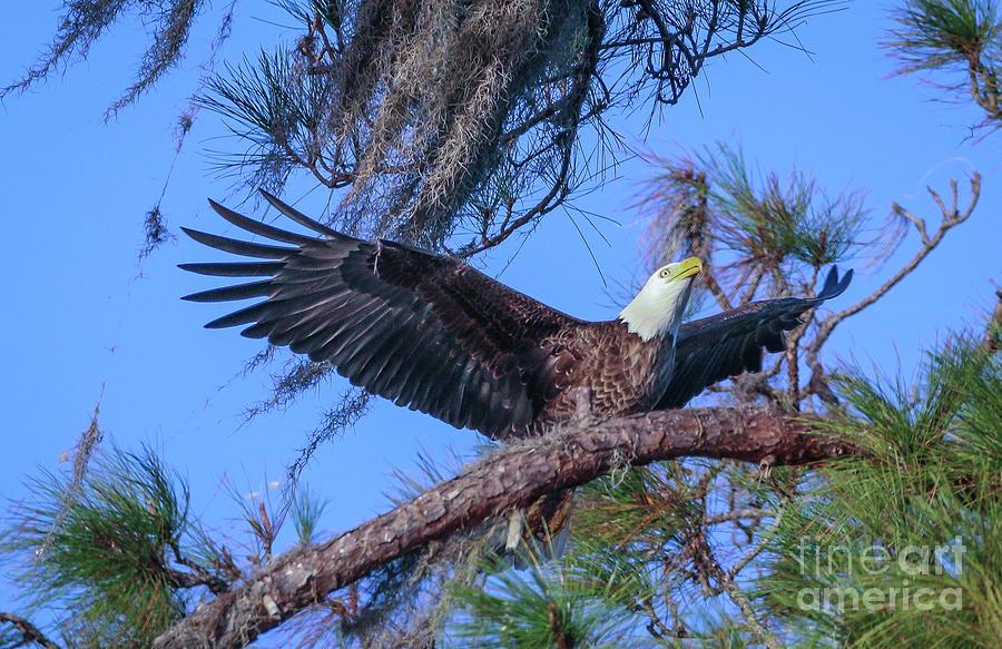 Taking Flight by Tom Claud