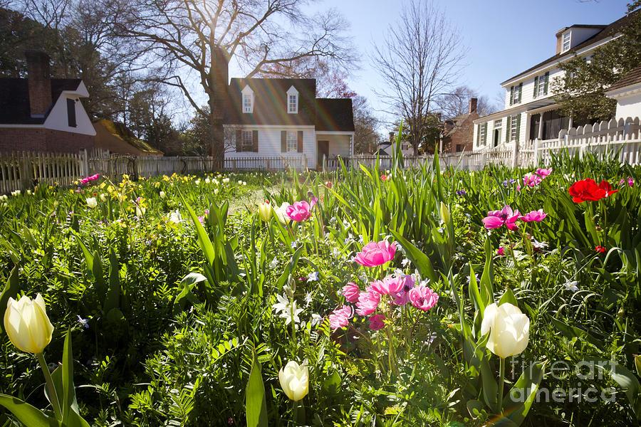 Taliaferro-Cole Garden in March by Rachel Morrison