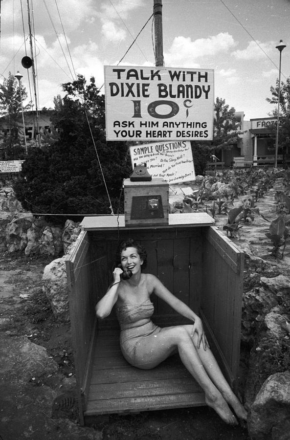 Talking Dixie Photograph by Nocella