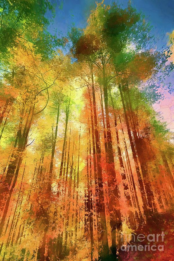 Tall Autumn Trees ap by Dan Carmichael