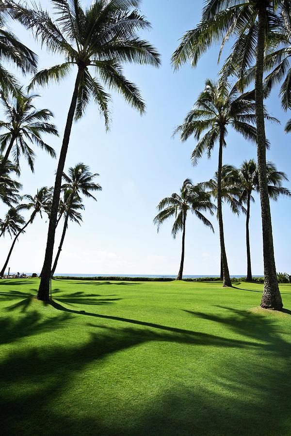 Tall Coconut Palm Trees Spring Break Photograph by Akurtz
