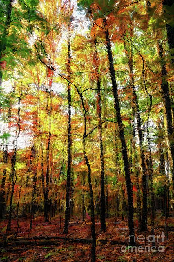 Tall Fall Trees in the Blue Ridge AP by Dan Carmichael