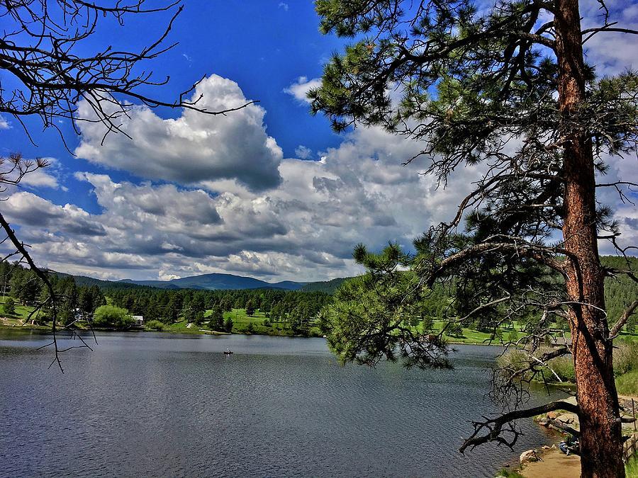 Tall Pine at Evergreen Lake by Dan Miller