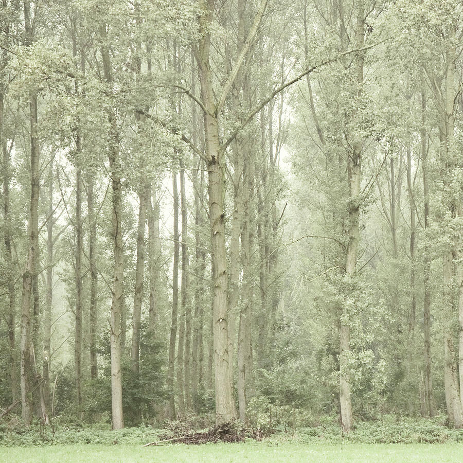 Tall Trees Photograph by Ineke Kamps