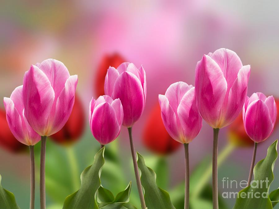 Tall Tulips by Morag Bates