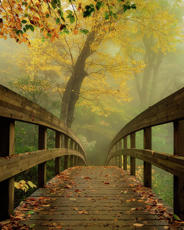 Tanawha Trail Blue Ridge Parkway - Foggy Autumn by Mike Koenig