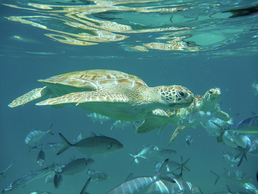 Tandem Turtles by Mark Hunter