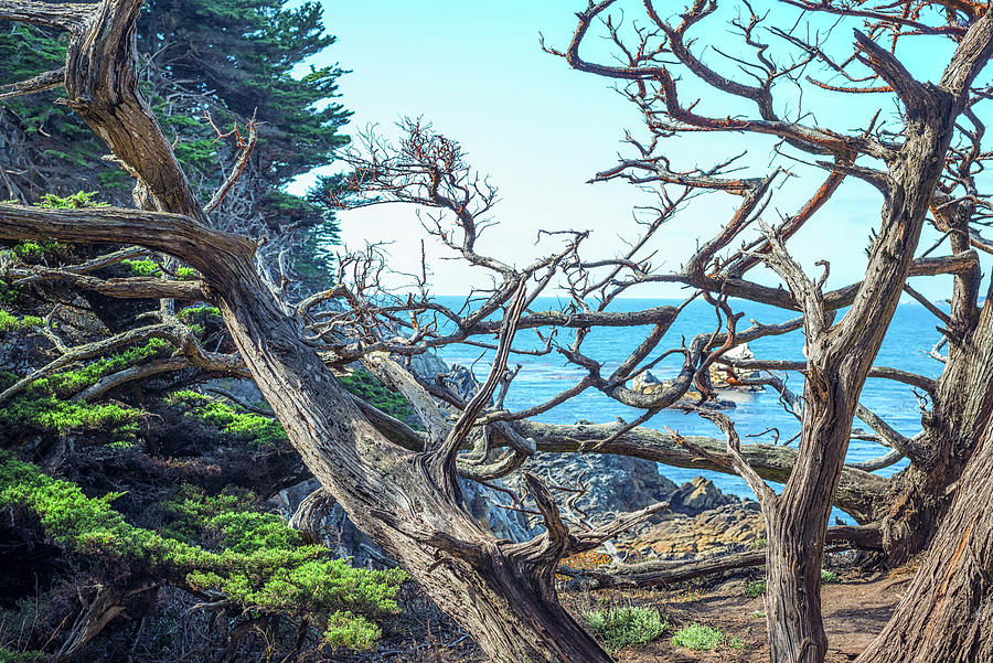 Tangled Up In Blue by Joseph S Giacalone