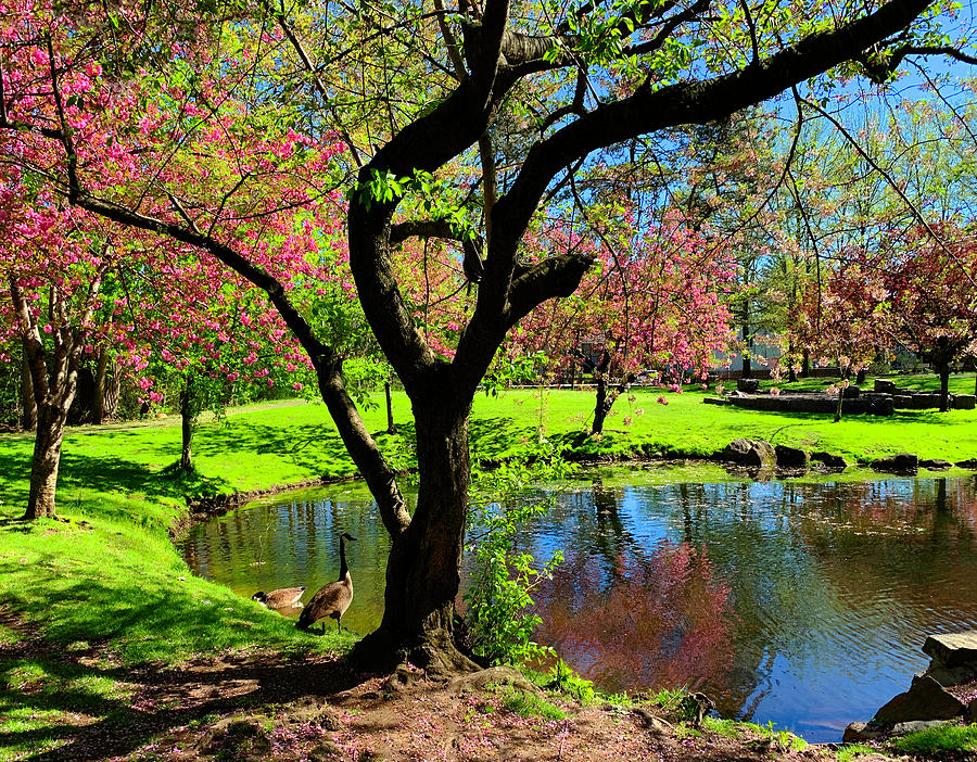 Tappan Park Spring by Roger Bester