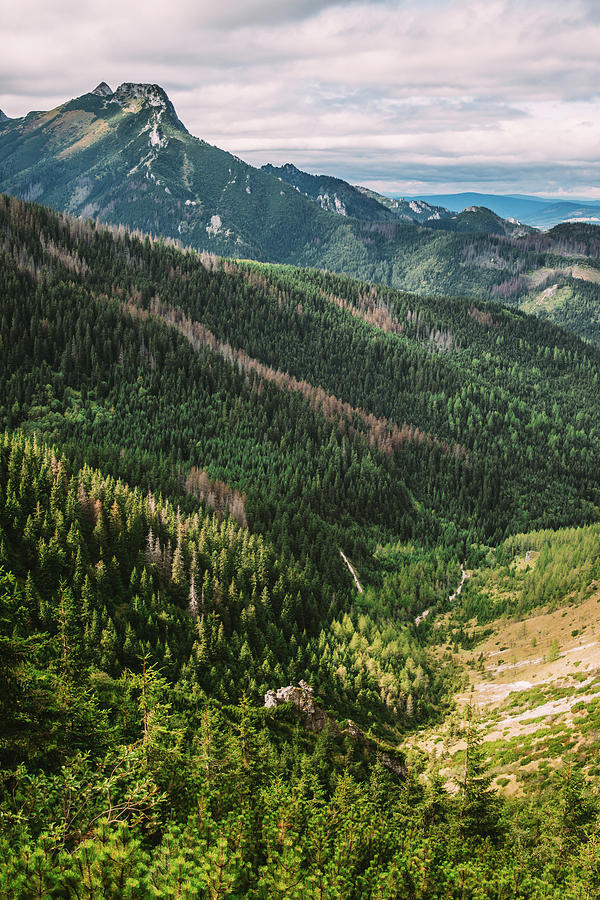 Tatra Mountains Green Summer Landscape by Pati Photography