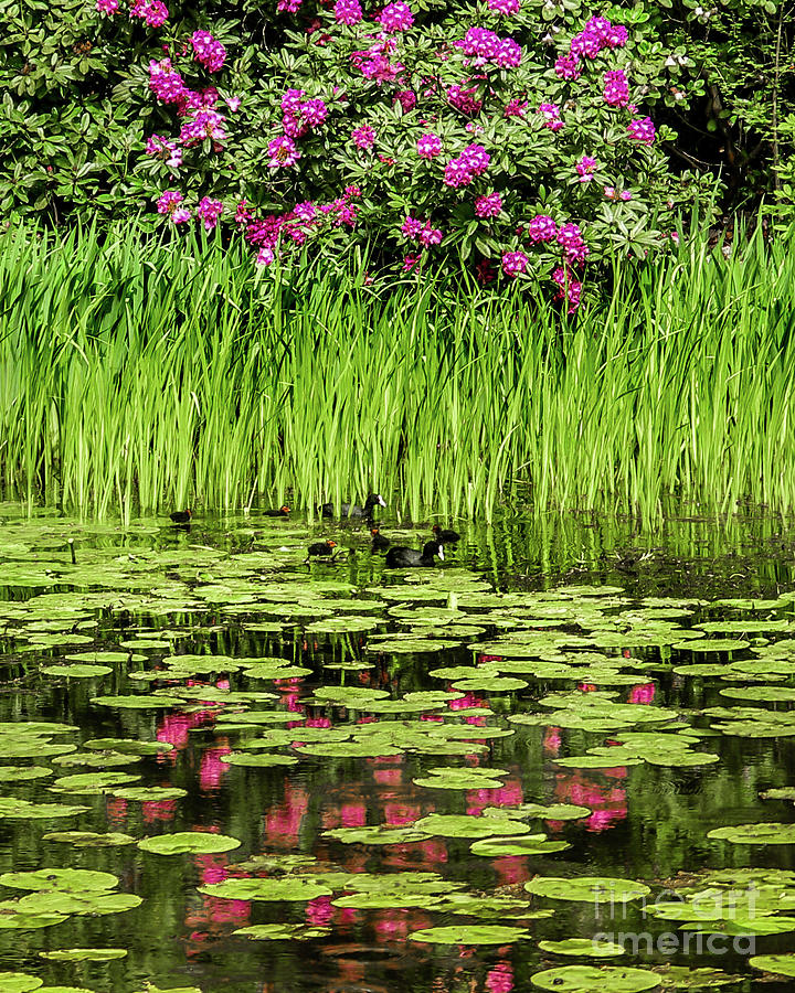 Tatton Park Pond by David Meznarich