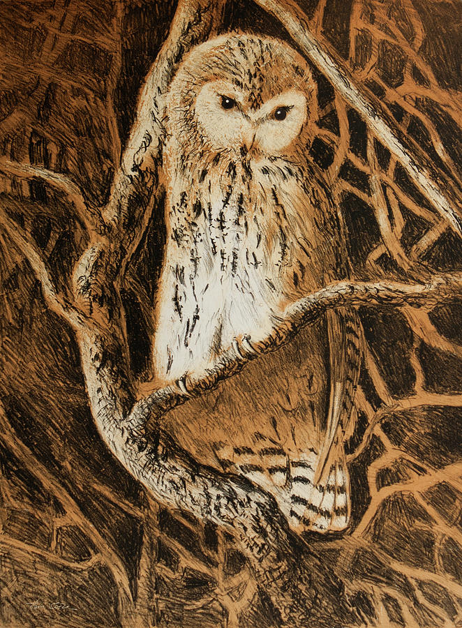 Tawny Owl by Hans Egil Saele