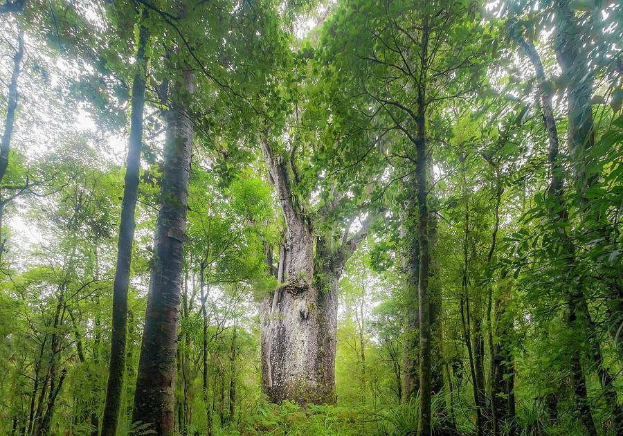 Te Matua Ngahere, Giant Kauri Tree Photograph by Kim Westerskov