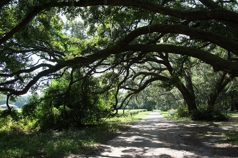 Tea and Trees by Ed Waldrop