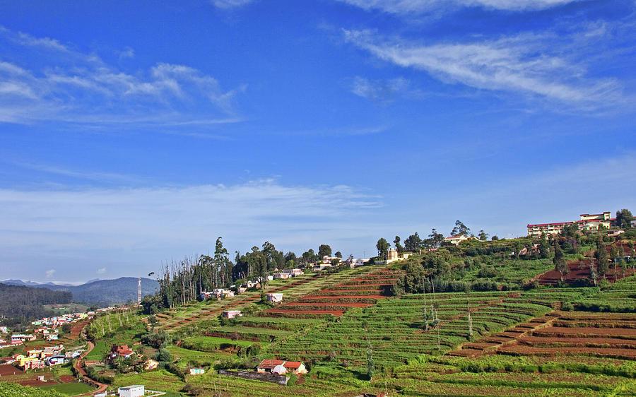 Tea Gardens Photograph by © Deepak Bhatia