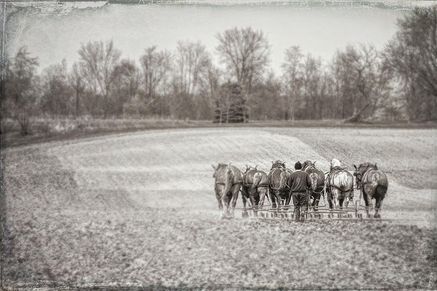 Team of Six Horses Tilling the Fields by Tom Mc Nemar
