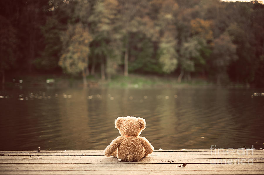 Gift Photograph - Teddy Bear by Creaturart Images