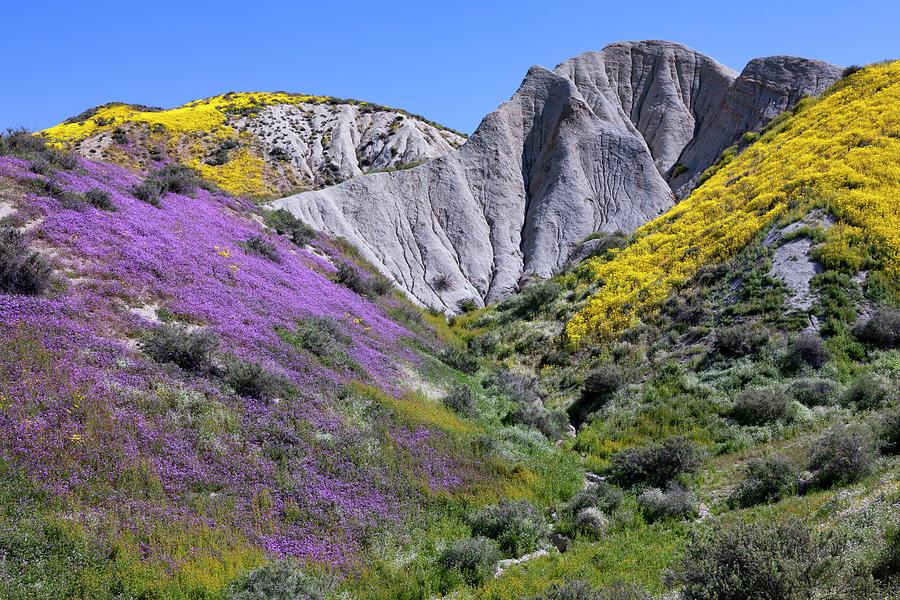 Temblor Range Wildflowers 1 Photograph