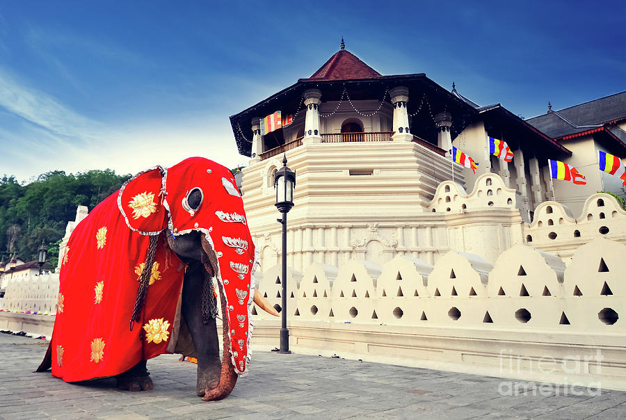 Temple Of The Tooth Of Buddha, Kandy Photograph by Surangaw