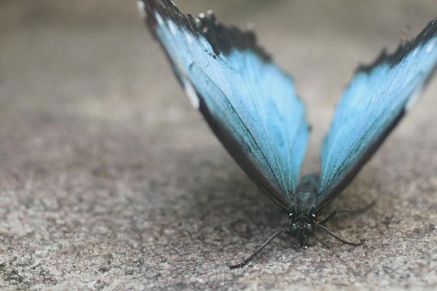 Tender Blue Butterfly by The Art Of Marilyn Ridoutt-Greene