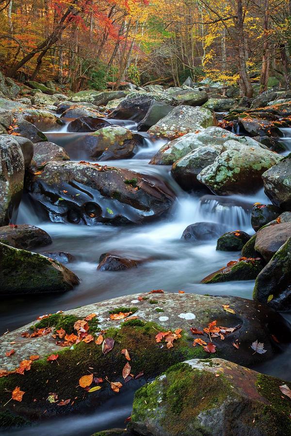 Tennessee Autumn  by Harriet Feagin