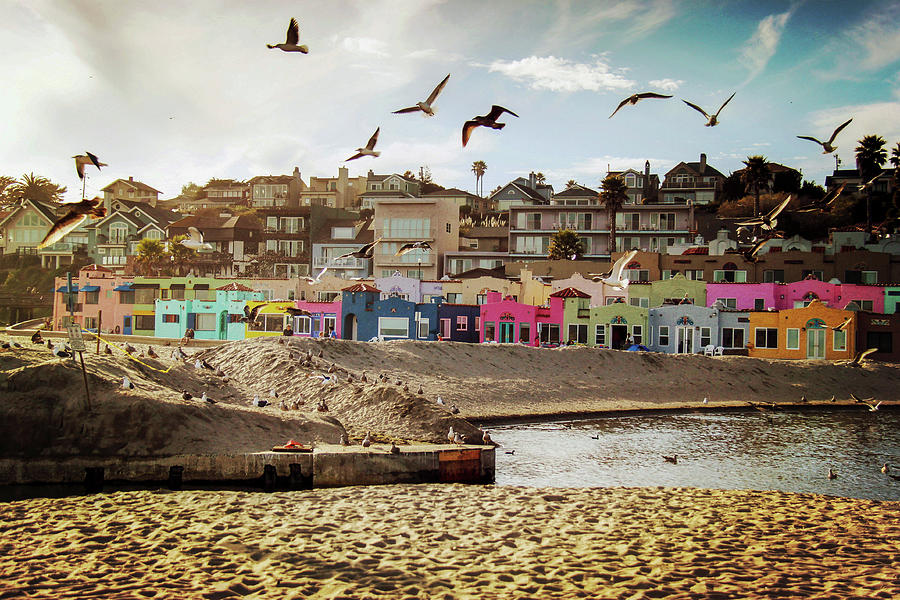 Terns And Colorful Houses On Capitola Photograph by Lingxiao Xie