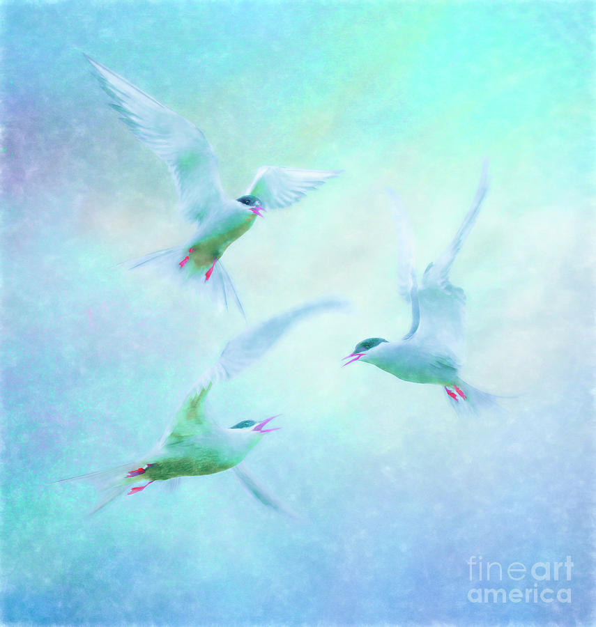 Terns squabbling by Brian Tarr
