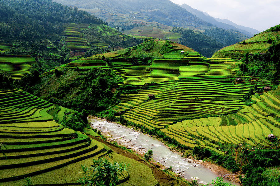 Terraced Rice Fields Photograph by @chinnyplus