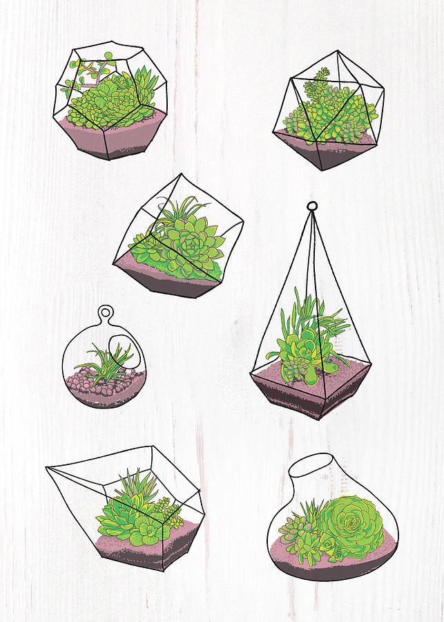 Terrariums by Jen Montgomery