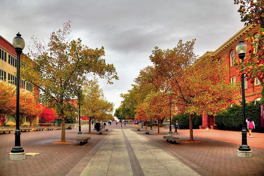 Terrell Mall by David Patterson