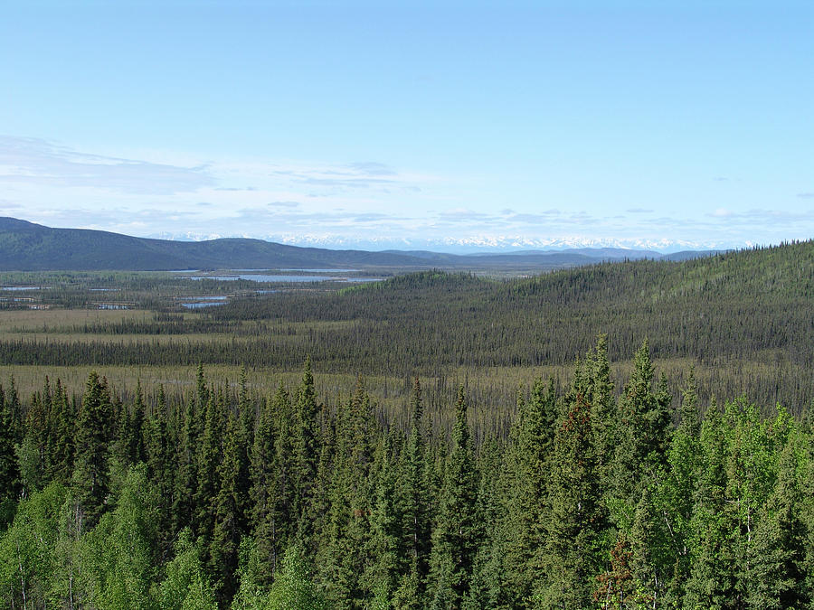 Tetlin National Wildlife Reserve Photograph