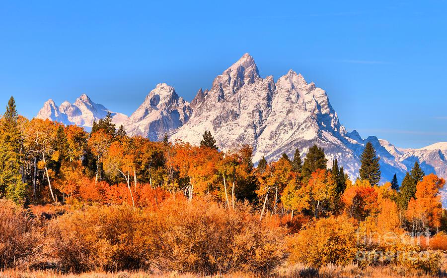 Teton Snow Caps Over Fall Foliage by Adam Jewell