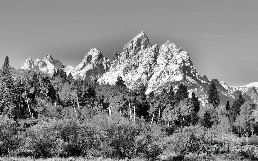 Teton Snow Caps Over Fall Foliage Black And White by Adam Jewell