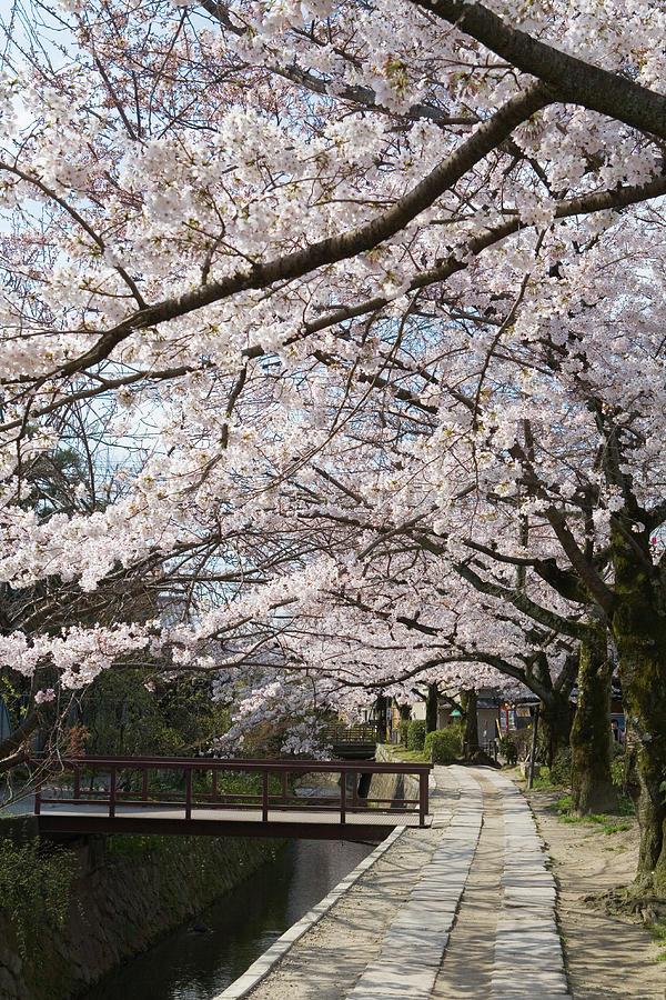 Tetsugakunomichi, Kyoto Prefecture Photograph by Daj