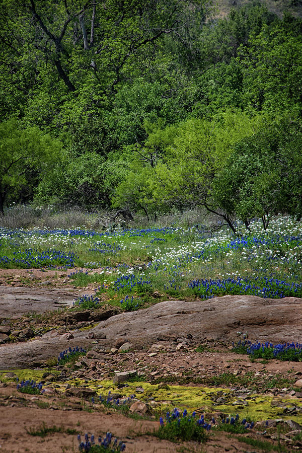 Texas Bloom by Jolynn Reed