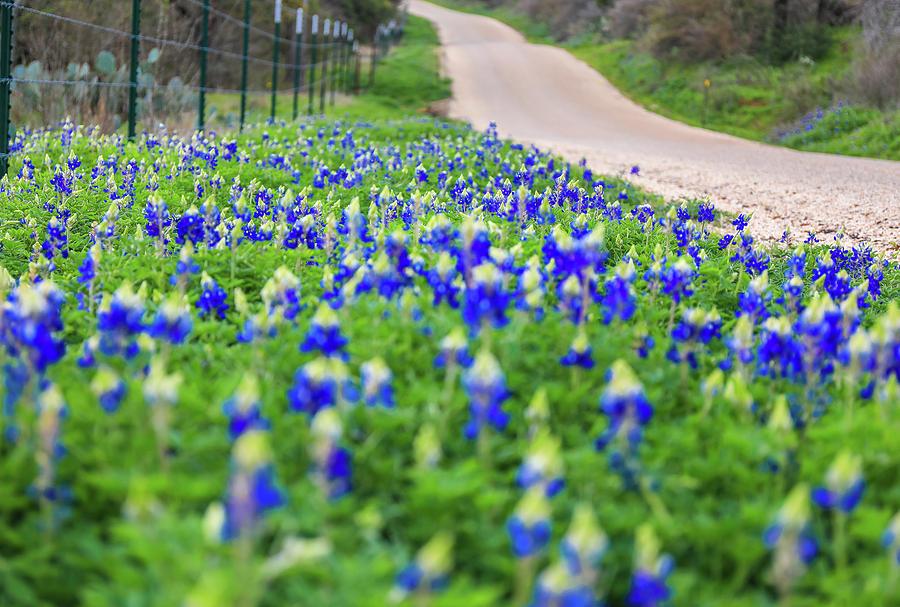 Texas Bluebonnet Road by Dan Sproul