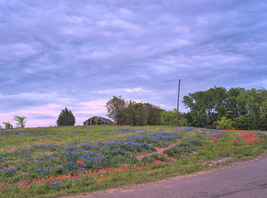 Texas Bluebonnets 8 by Andrea Anderegg