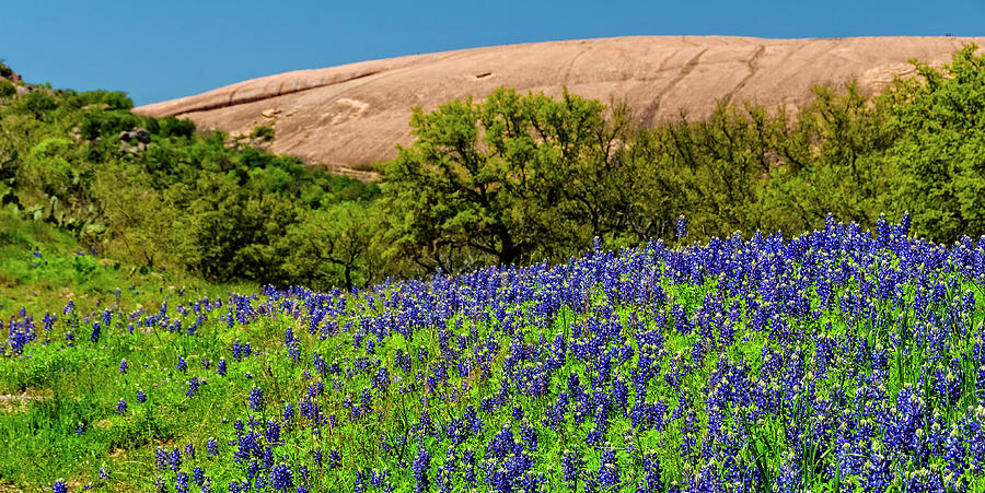 Texas Bluebonnets and Enchanted Rock 2016 by Greg Reed