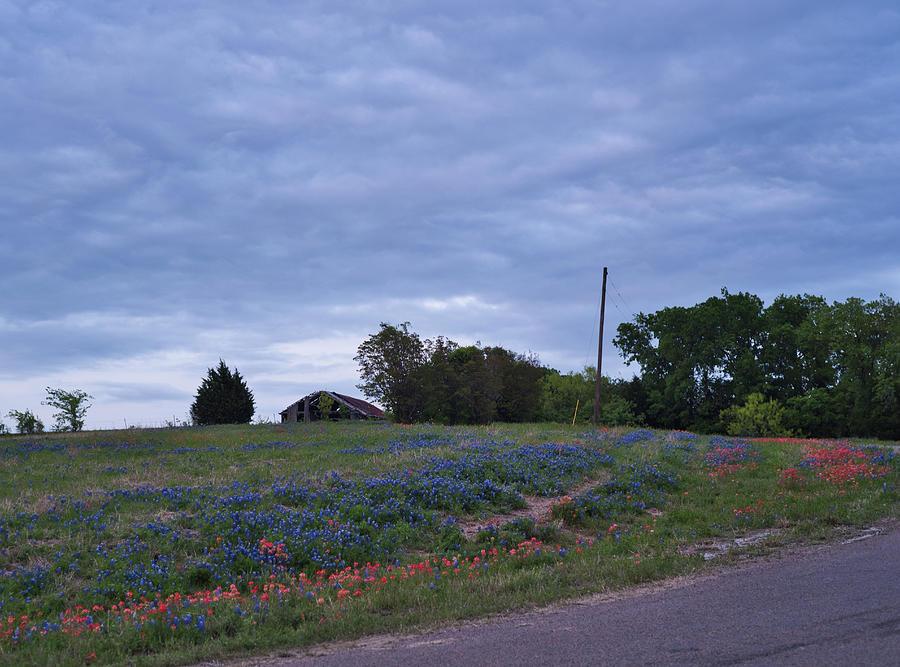 Texas Bluebonnets by Andrea Anderegg
